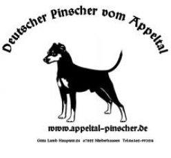 Appeltal-Pinscher